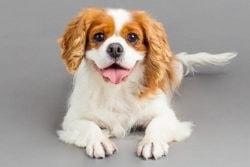 Dog Photo Challenge ~ SMILE!