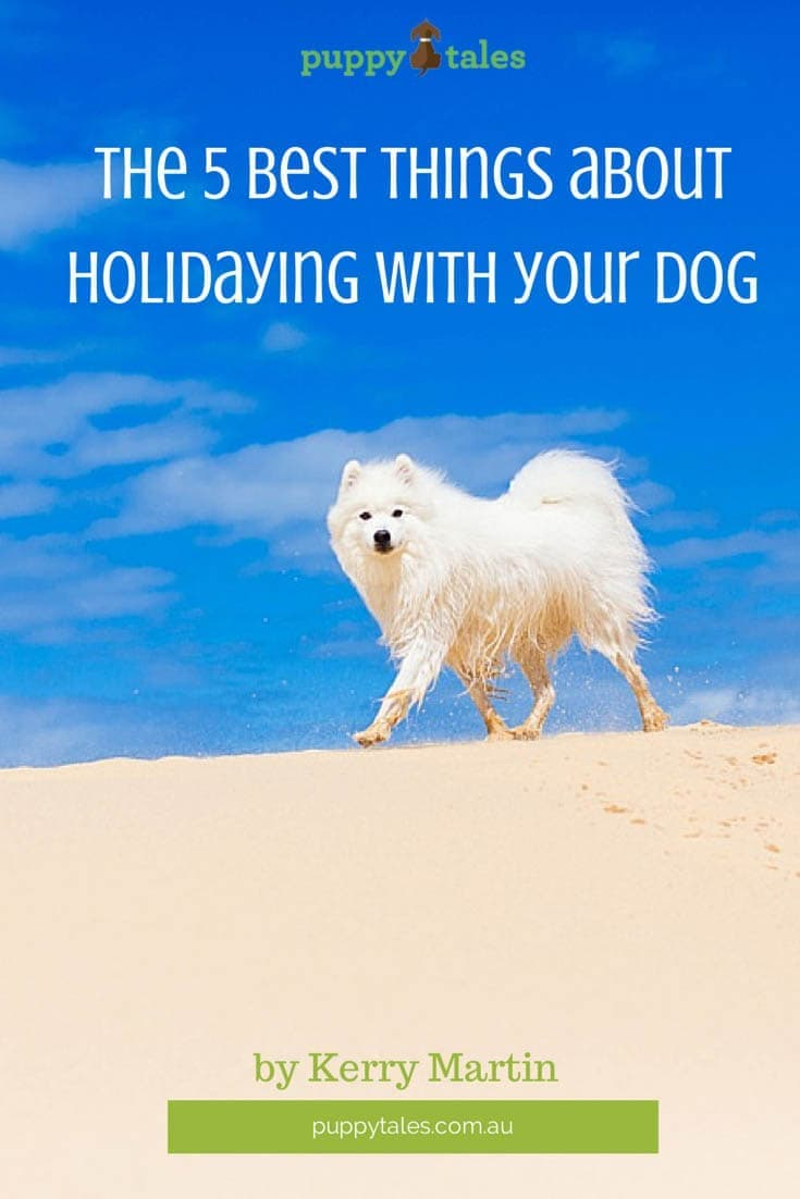 The 5 best things about holidaying with your dog