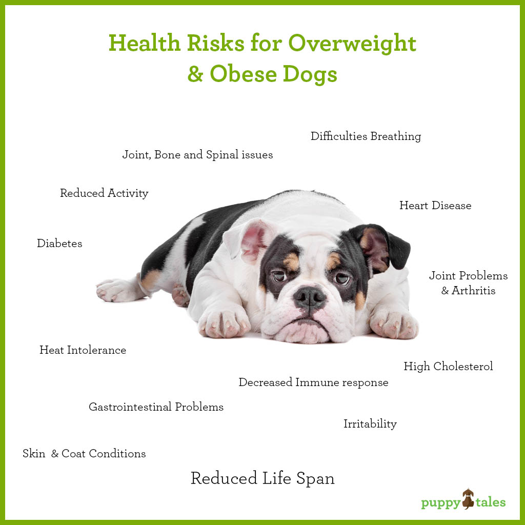 Health Risks for Overweight & Obese Dogs