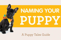 Naming Your Puppy Guide