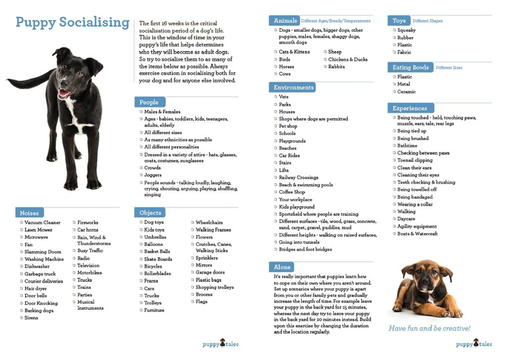 Socialisation Checklist for Your New Puppy