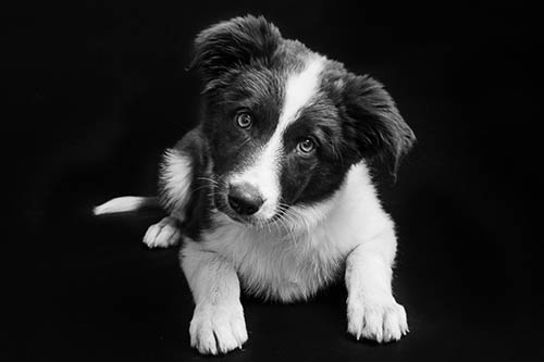 Dog photo challenge black white puppy tales