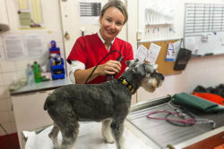 Dr Abbie Tipler talksabout deadly tick paralysis, how it may affect your dog, signs to watch for and most importantly, how to prevent your dog from being a fatal statistic.