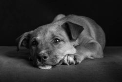 Your Puppy's First Health Check ~ What to Expect