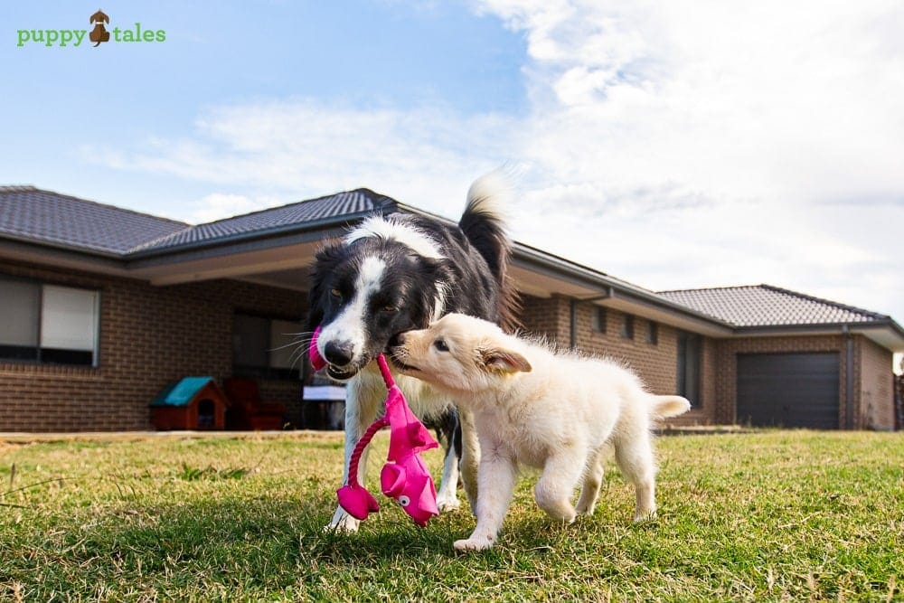 Your Puppy's First Health Check ~ Socialisation