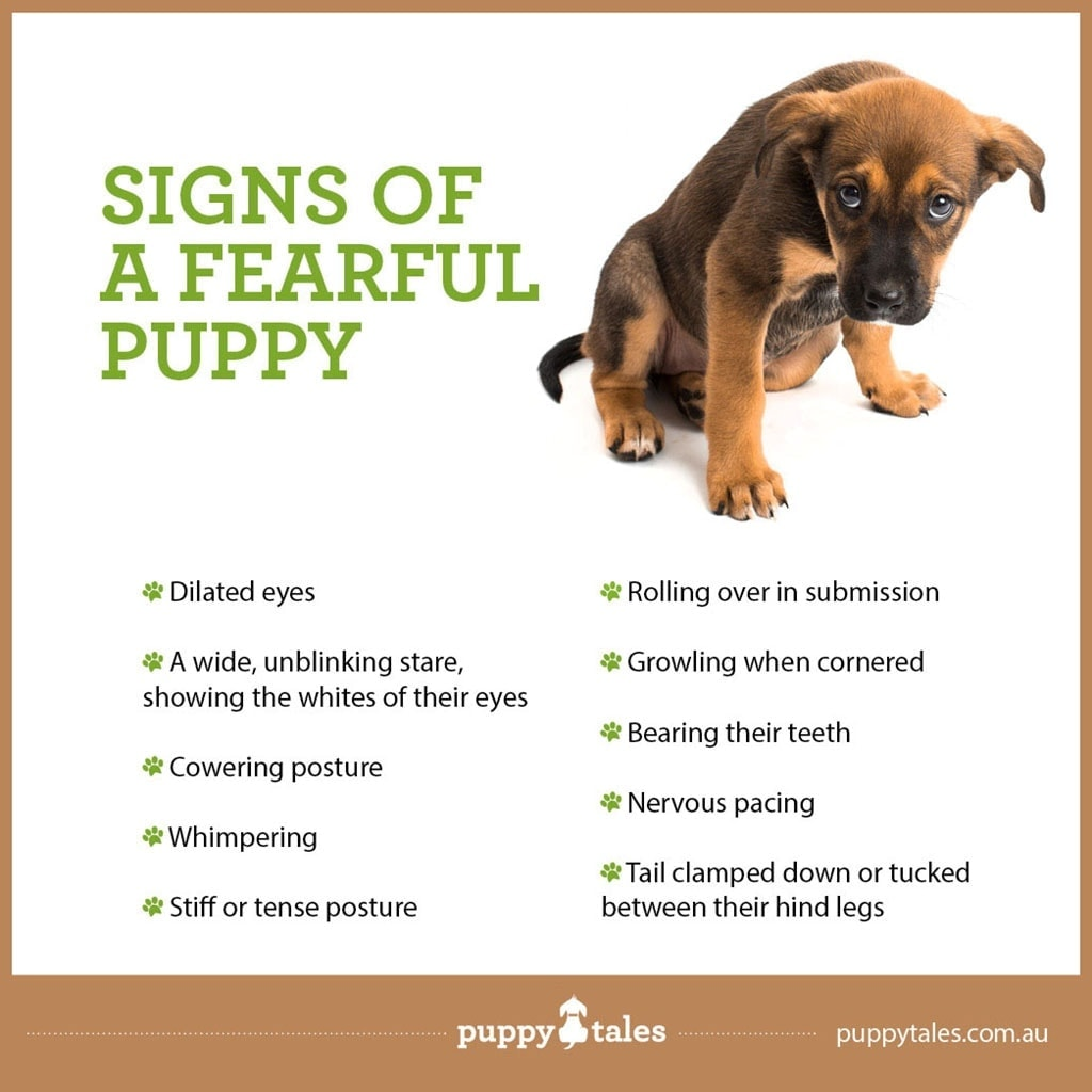 Signs of a Fearful Puppy ~ Puppy Tales