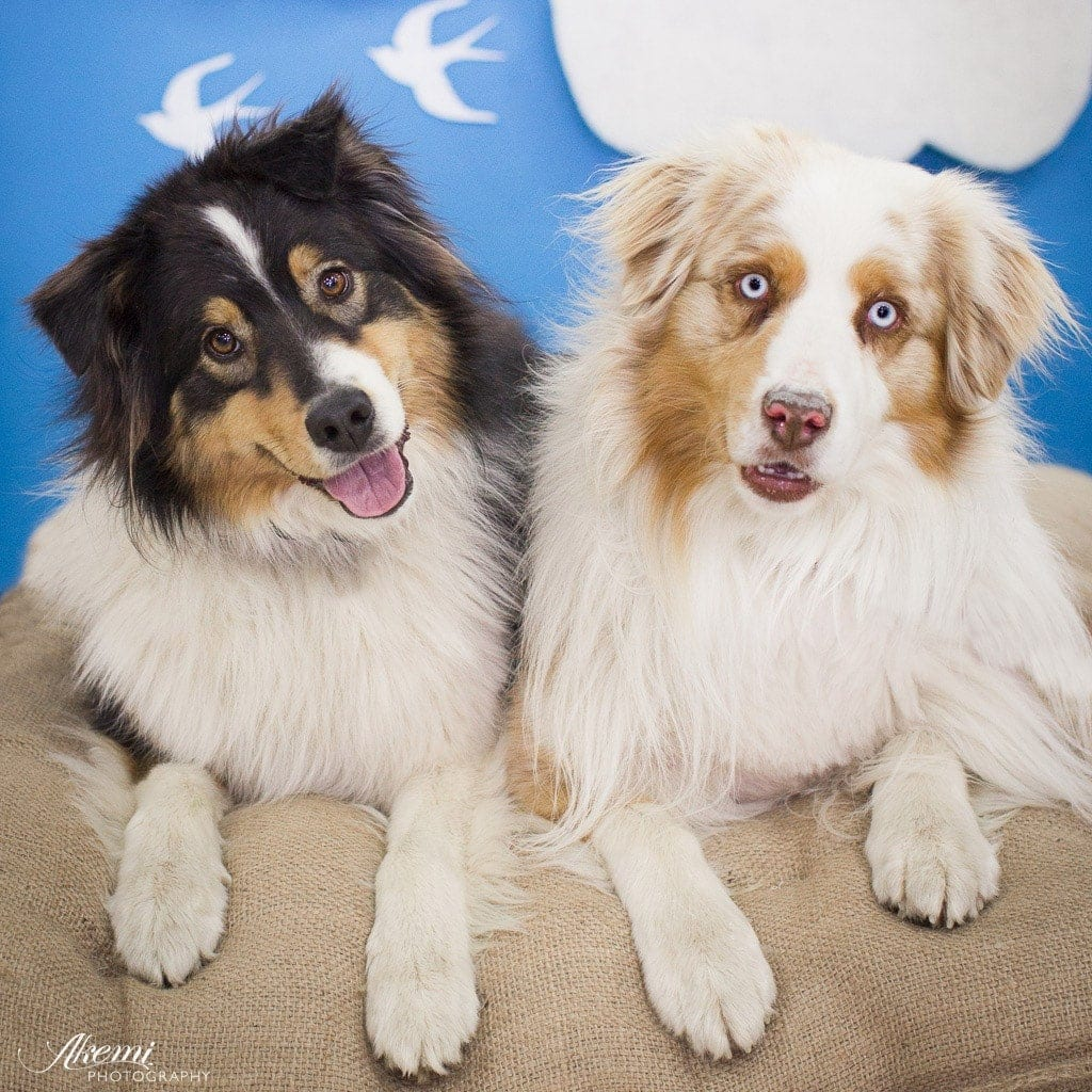 Paw it Forward: Good Deeds with Dogs