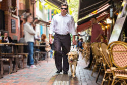 akemi-photography-access-all-areas-guide-dogs-victoria-feature
