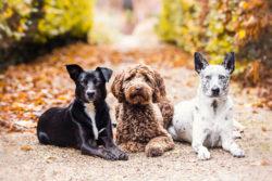 Puppy Tales Dog Photo Challenge ~ Autumn