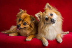 Puppy Tales Dog Photo Challenge ~ Headtilt