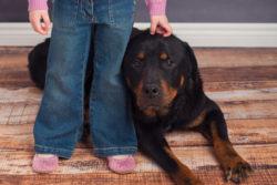akemi-photography-kids&pets-feature