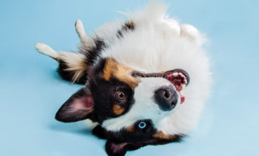 Puppy Tales Dog Photo Challenge ~ Upside Down