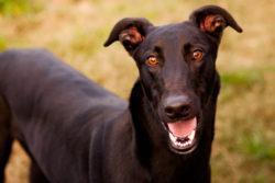 akemi-photography-greyhound-feature