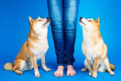 Puppy Tales Dog Photo Challenge ~ My Dog & I