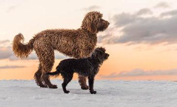 Puppy Tales Photo Challenge - Sunset