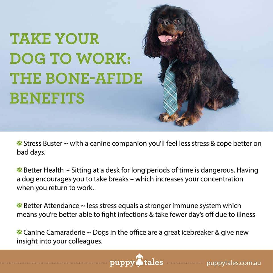 Take Your Dog to Work the Benefits- Puppy Tales