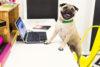 Puppy Tales Photo Challenge - Working Dog