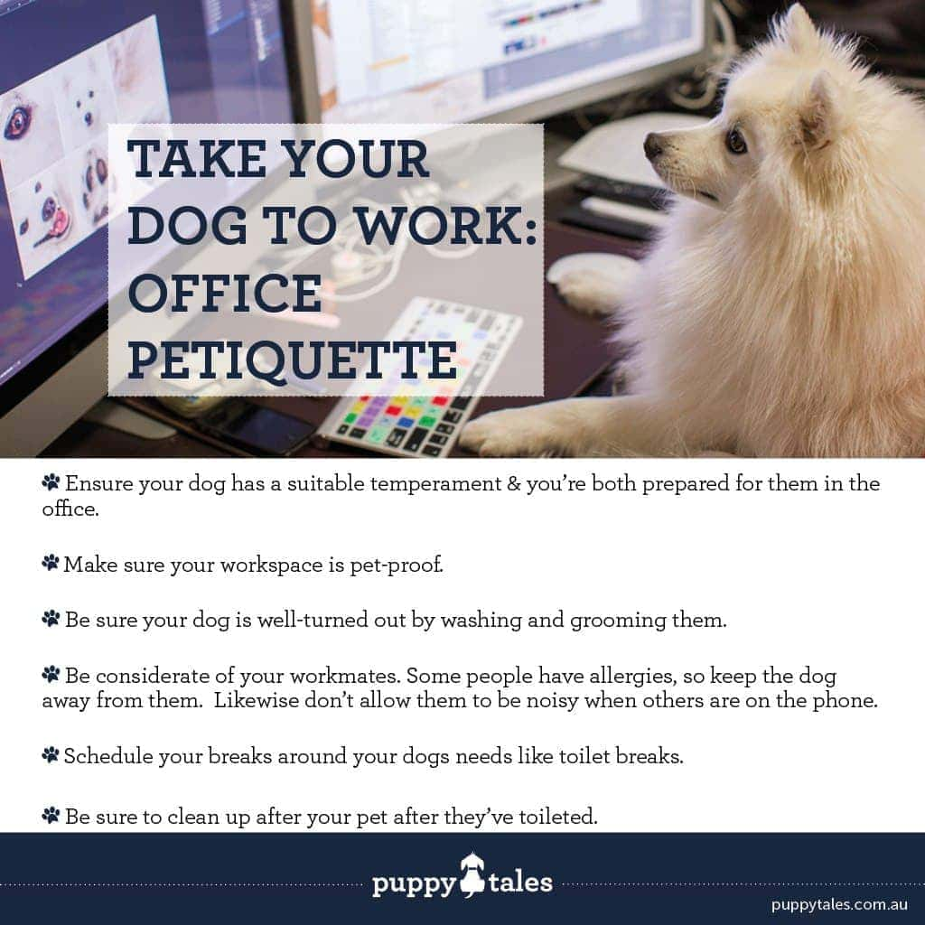 Office Petiquette! That is, the office etiquette of taking your dog to work with you.