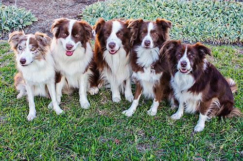 The Wonderdogs