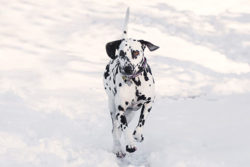 Puppy Tales Photo Challenge ~ Winter Time