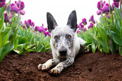 Puppy Tales Photo Challenge ~ Flowers