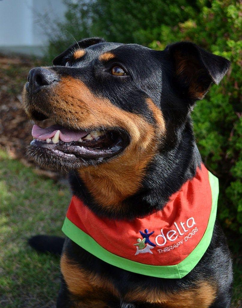 Delta Therapy Dog Miska