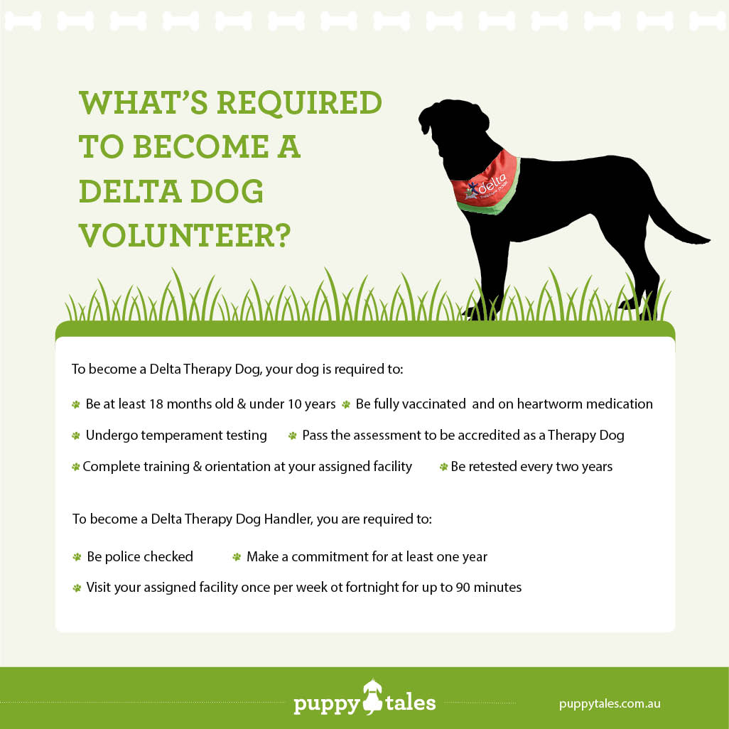 What's Required to Become a Delta Therapy Dog