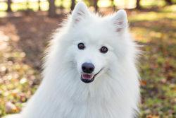 Puppy Tales Photo Challenge ~ Cute, Cute, Cute