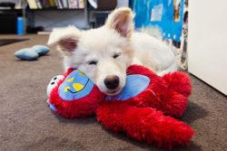 Puppy Tales Photo Challenge ~ Sleepy Dogs