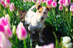 Puppy Tales Photo Challenge ~ Pink