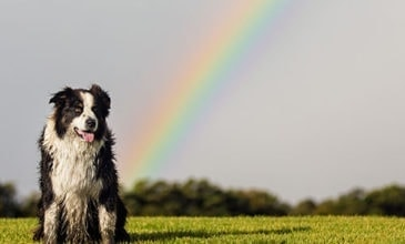 Puppy Tales Photo Challenge ~ Rainbow