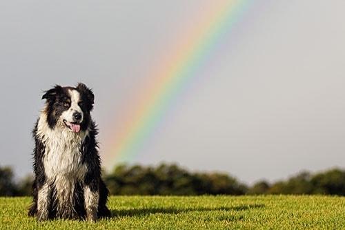 Puppy Tales Photo Challenge ~ Rainbow