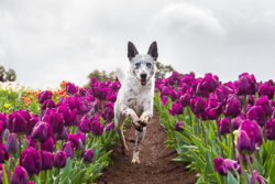 Puppy Tales Photo Challenge ~ Action