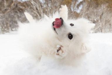 Puppy Tales Photo Challenge ~ LOL