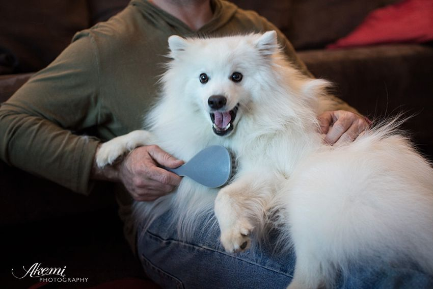 Regular brushing and grooming is essential for a healthy dog coat and a tidy home