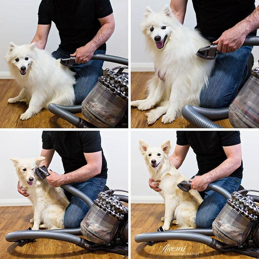 The Dyson Groom Tool helps keep a tidy home and dog during the spring shedding