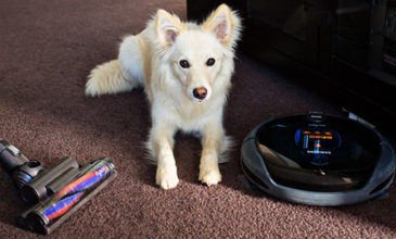 Dog Shedding: Essentials for a Tidy Home & Dog