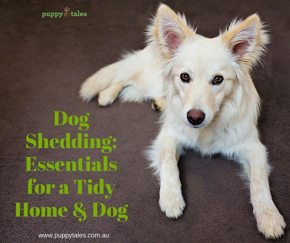 Dog Shedding: Essentials for a Tidy Home & Dog