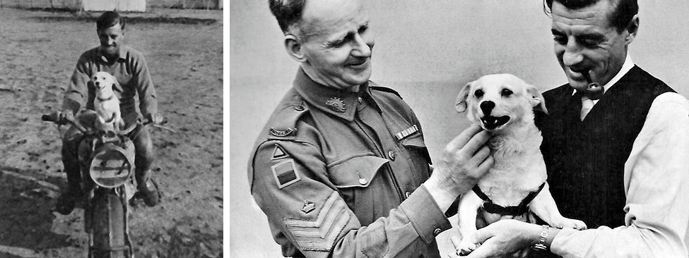 World War Two Dog: Horrie