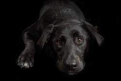Puppy Tales Photo Challenge ~ Black