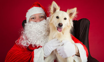 Puppy Tales Photo Challenge ~ Photos with Santa