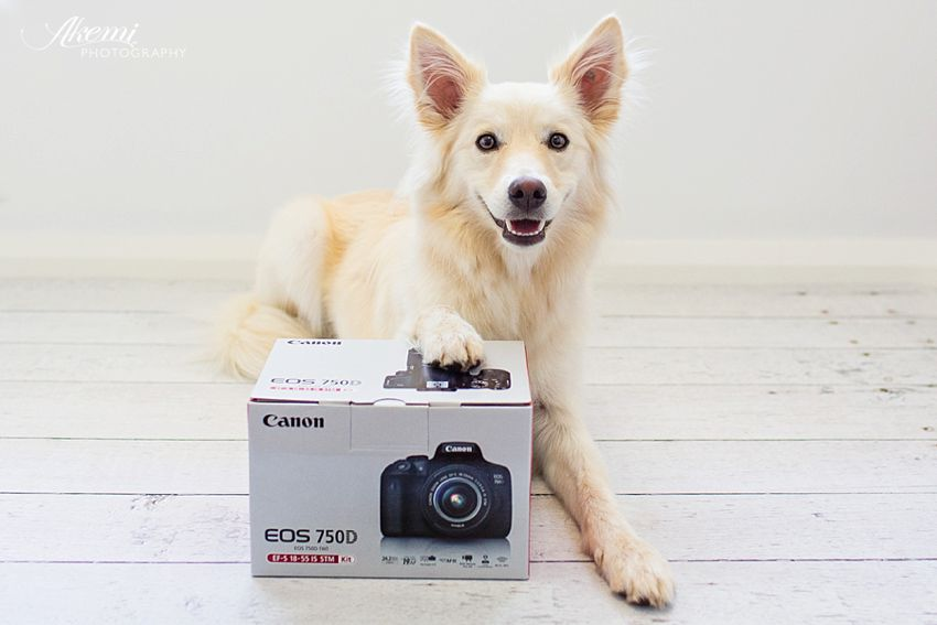 Win a Canon 750D Camera Kit with Puppy Tales this Christmas!