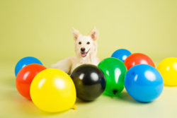 Puppy Tales Photo Challenge ~ Dog Party