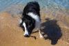 Puppy Tales Photo Challenge ~ Shake