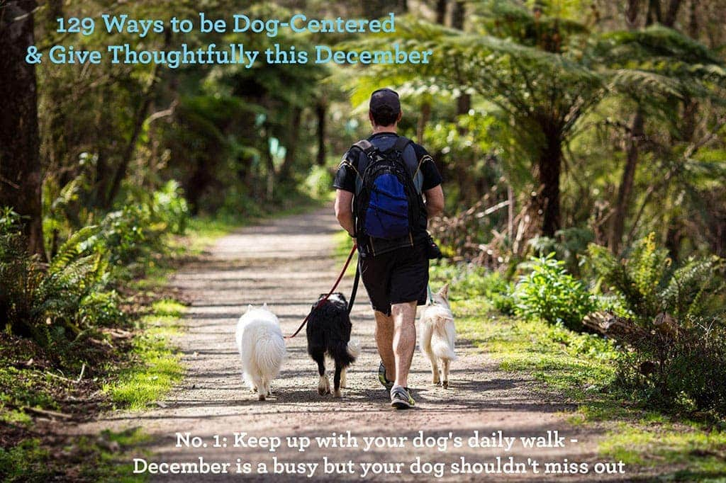 Ways to be Dog - Centred & Give Thoughtfully this December ~ Keep up wiht your dog's daily walk.