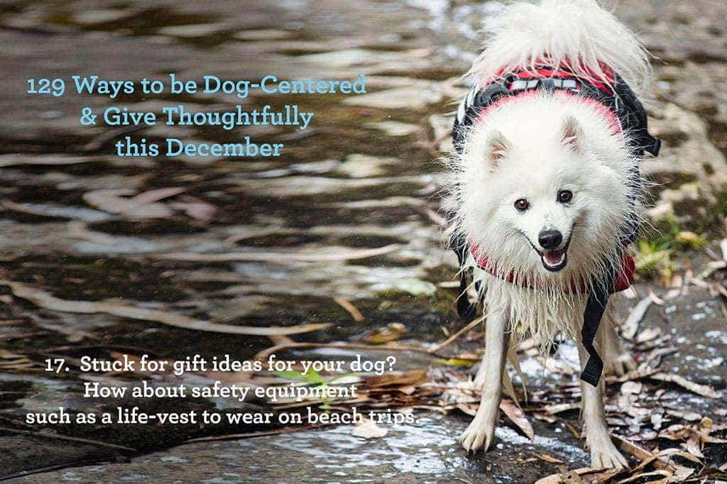 Ways to be Dog - Centred & Give Thoughtfully this December ~ Give your dog a practical gift like safety equipment