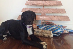 Dog Safe Christmas Trees