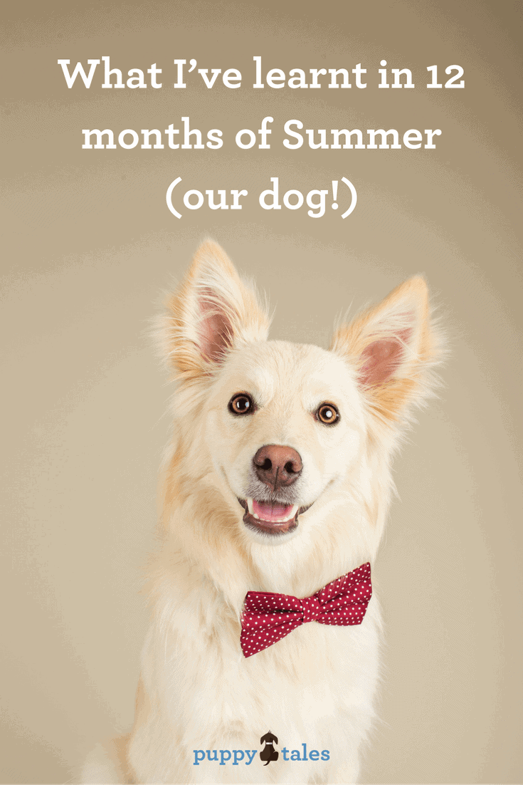 Twelve Months of Life with our puppy Summer