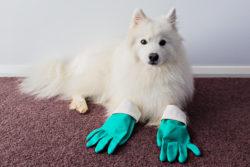 Dog Shedding: Essentials for a Tidy Home
