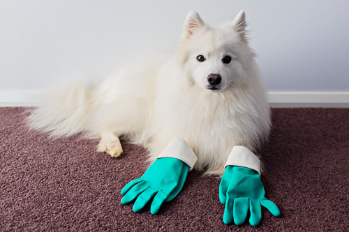 Dog Shedding: Essentials for a Tidy Home